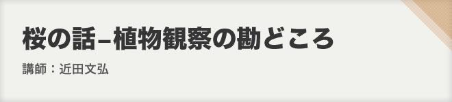 桜の話-植物観察の勘どころ