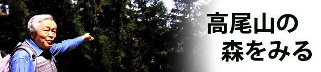 高尾山の森をみる