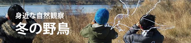 身近な自然観察 冬の野鳥