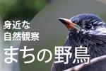 身近な自然観察 まちの野鳥